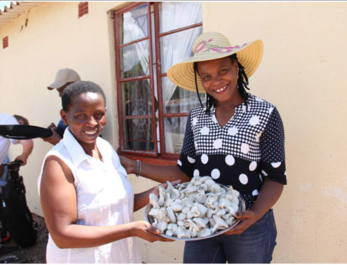 Chido Govera – The Child who moved a mountain with mushroom farming